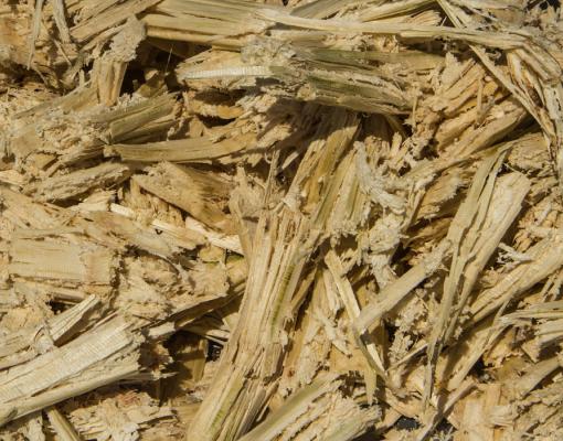 Dried Sugarcane Bagasse